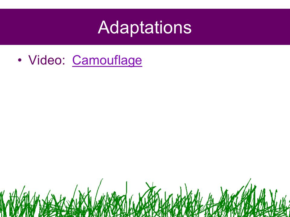 Adaptations Video: CamouflageCamouflage