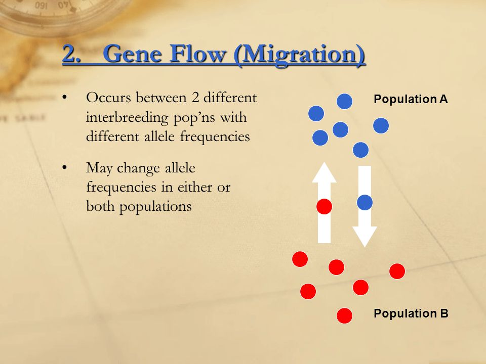 2.Gene Flow (Migration) Occurs between 2 different interbreeding pop'ns with different allele frequencies May change allele frequencies in either or b