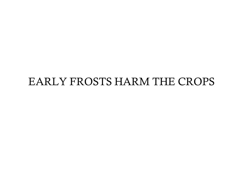 EARLY FROSTS HARM THE CROPS