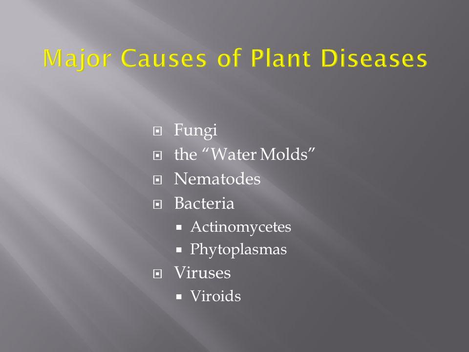  Fungi  the Water Molds  Nematodes  Bacteria  Actinomycetes  Phytoplasmas  Viruses  Viroids
