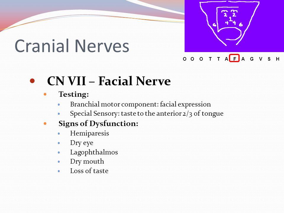 Cranial Nerves CN VII – Facial Nerve Testing: Branchial motor component: facial expression Special Sensory: taste to the anterior 2/3 of tongue Signs