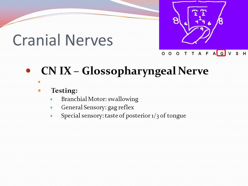 Cranial Nerves CN IX – Glossopharyngeal Nerve Testing: Branchial Motor: swallowing General Sensory: gag reflex Special sensory: taste of posterior 1/3