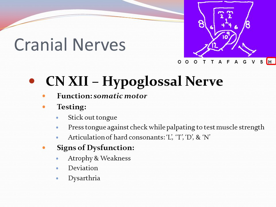 Cranial Nerves CN XII – Hypoglossal Nerve Function: somatic motor Testing: Stick out tongue Press tongue against check while palpating to test muscle