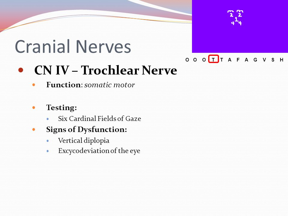 Cranial Nerves CN X – Vagus Nerve Testing: Branchial motor: swallowing, gag reflex, soft palate elevation with uvula remaining while saying Ah Signs of Dysfunction: Dysphagia Hoarseness Uvula deviation O O O T T A F A G V S H