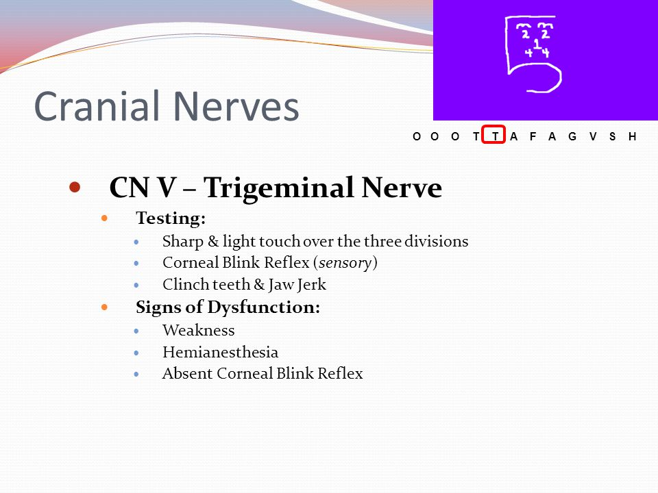 Cranial Nerves CN XII – Hypoglossal Nerve Function: somatic motor Testing: Stick out tongue Press tongue against check while palpating to test muscle strength Articulation of hard consonants: 'L', 'T', 'D', & 'N' Signs of Dysfunction: Atrophy & Weakness Deviation Dysarthria O O O T T A F A G V S H