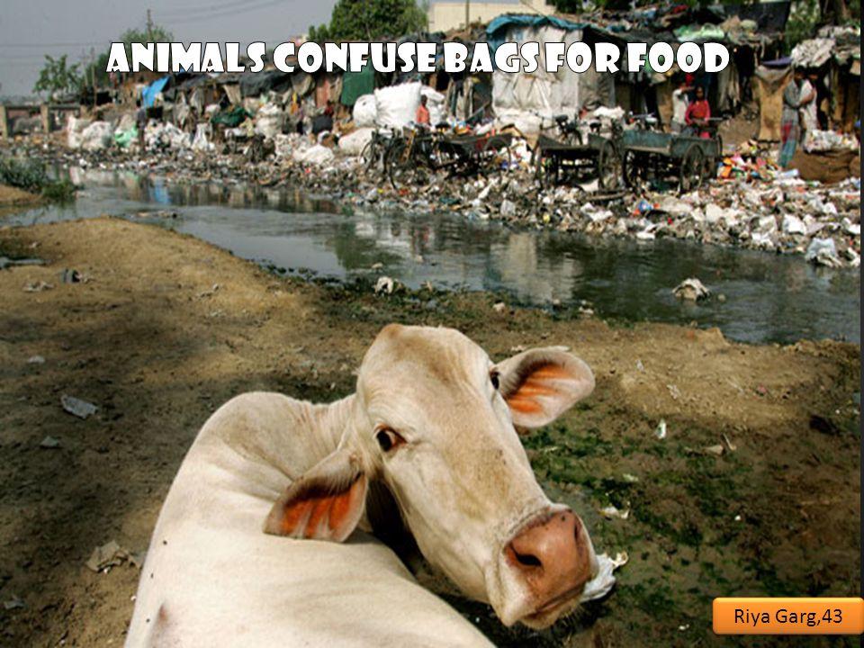 They eat them………. AND THEY DIE………….. Riya Garg,43