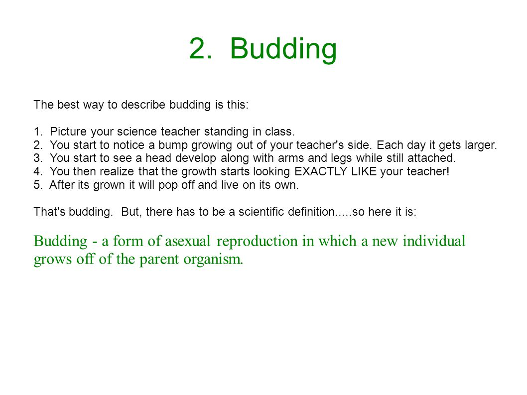 2. Budding The best way to describe budding is this: 1. Picture your science teacher standing in class. 2. You start to notice a bump growing out of y