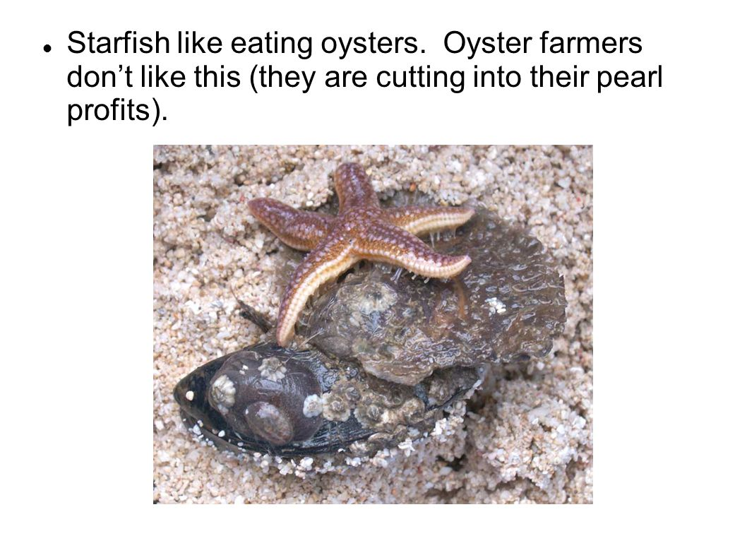 Starfish like eating oysters. Oyster farmers don't like this (they are cutting into their pearl profits).