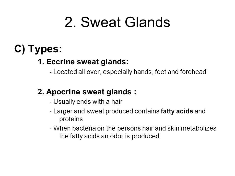 2. Sweat Glands C) Types: 1.
