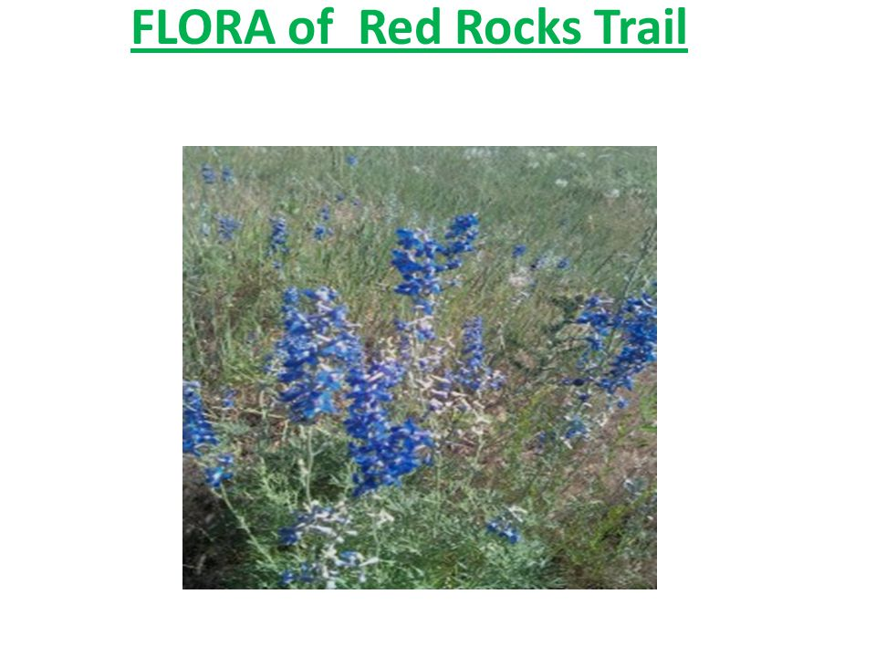 FLORA of Red Rocks Trail
