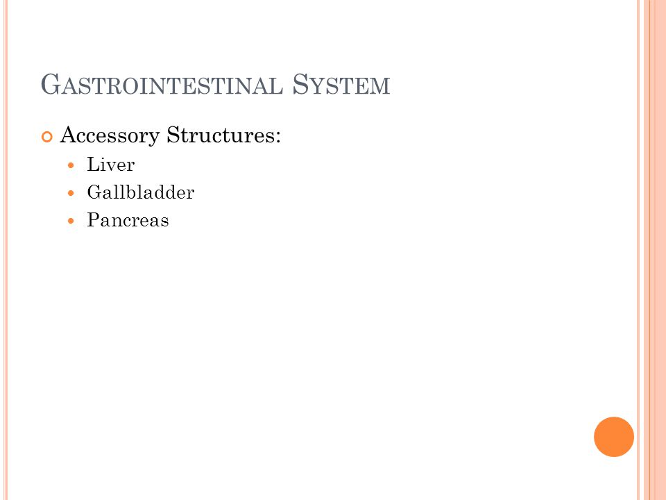 G ASTROINTESTINAL S YSTEM Accessory Structures: Liver Gallbladder Pancreas