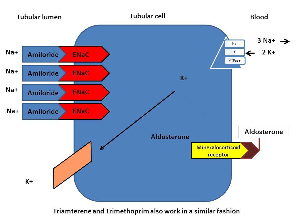 Tubular cell Tubular lumen NaKATPase Blood Aldosterone ENaC Amiloride Na+ K+ Na+ 3 Na+ 2 K+ Mineralocorticoid receptor Aldosterone Triamterene and Tri
