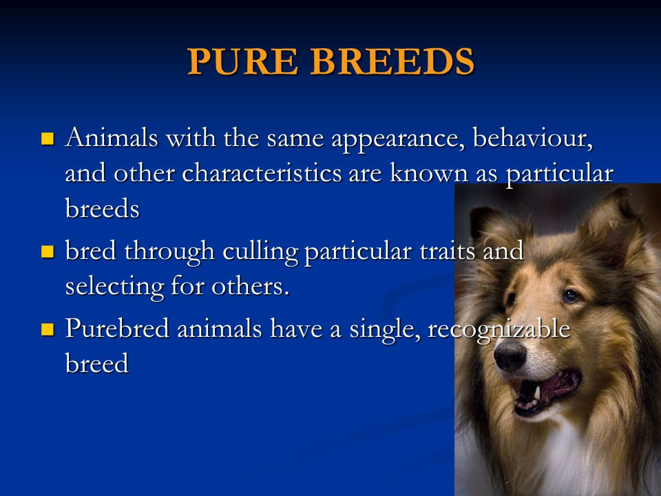 CROSS BREEDS The cross of animals results in what is called a crossbreed and crossbred plants are called hybrids.