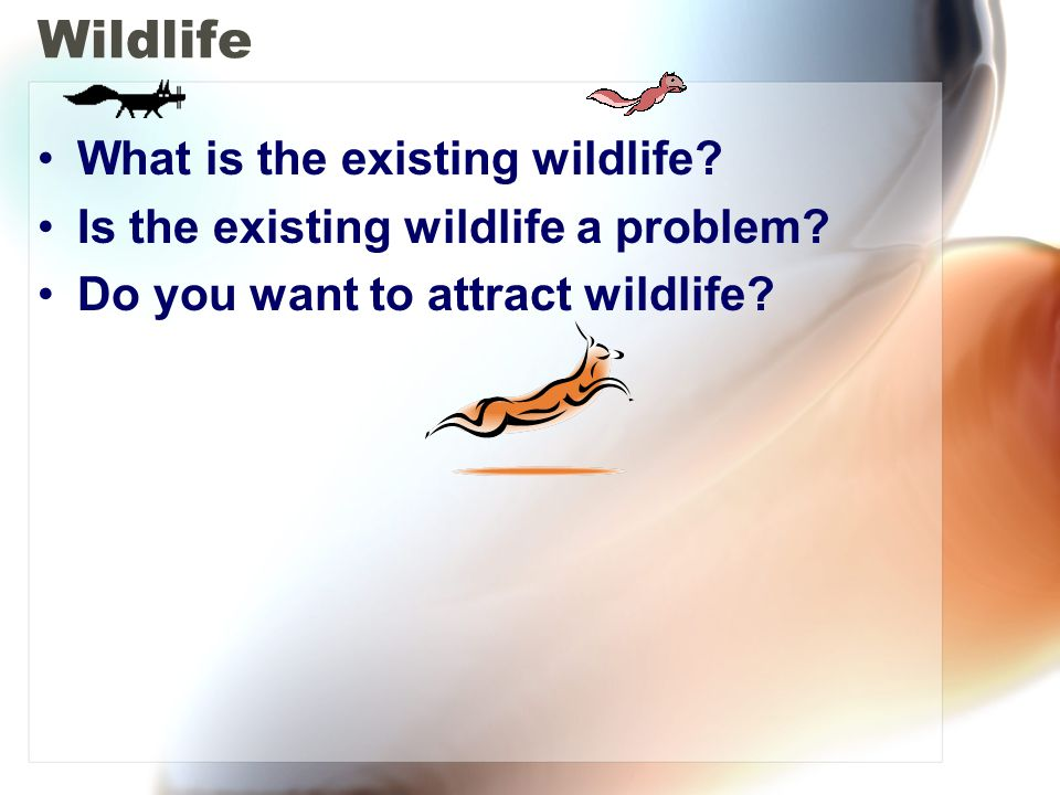 Wildlife What is the existing wildlife? Is the existing wildlife a problem? Do you want to attract wildlife?