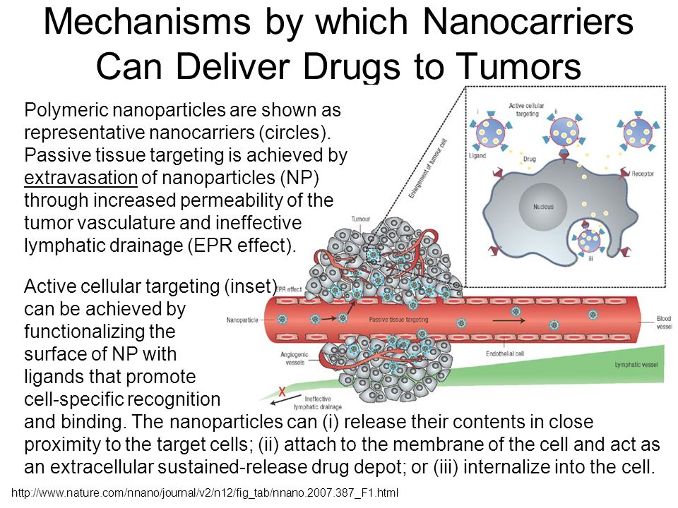 Mechanisms by which Nanocarriers Can Deliver Drugs to Tumors http://www.nature.com/nnano/journal/v2/n12/fig_tab/nnano.2007.387_F1.html Polymeric nanoparticles are shown as representative nanocarriers (circles).