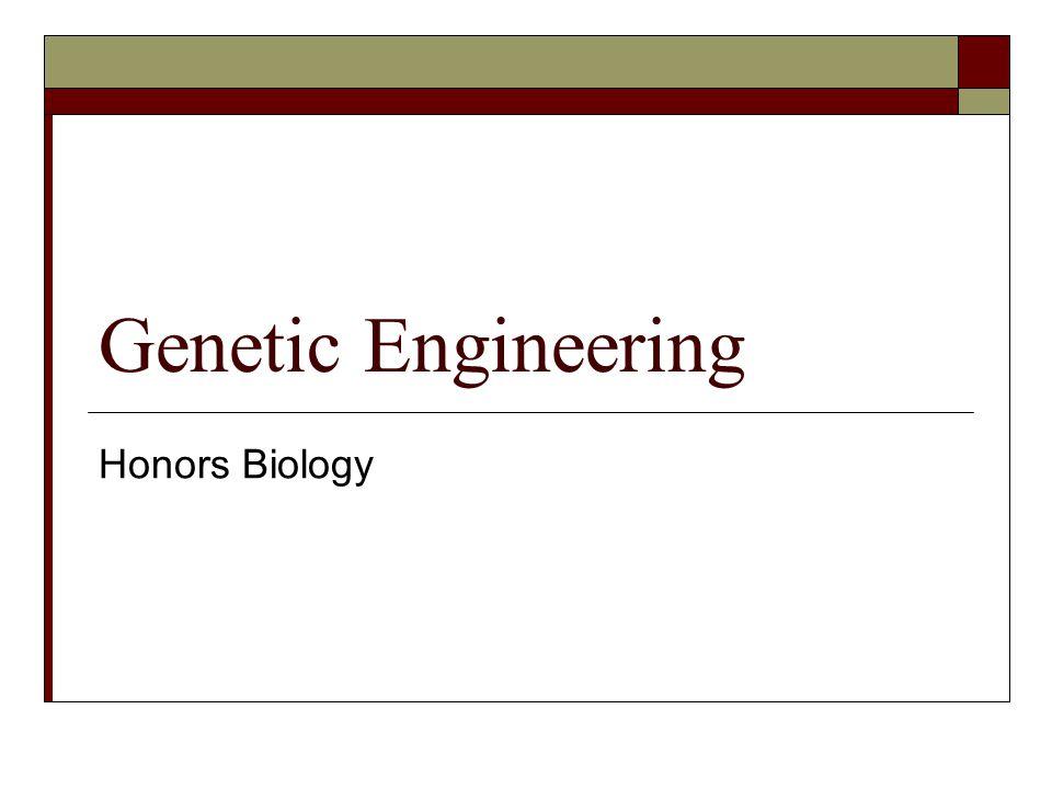 Vocabulary  Genetic Engineering  Recombinant DNA  Transgenic Organisms  Cloning  Gene Cloning  Gene Therapy  PCR  Gel Electrophoresis  DNA Fingerprinting  Gene Sequencing  Stem Cells