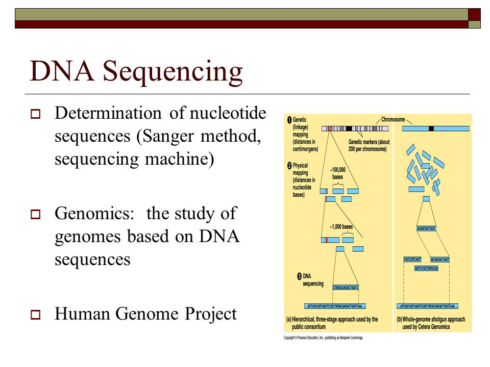 DNA Sequencing  Determination of nucleotide sequences (Sanger method, sequencing machine)  Genomics: the study of genomes based on DNA sequences  H
