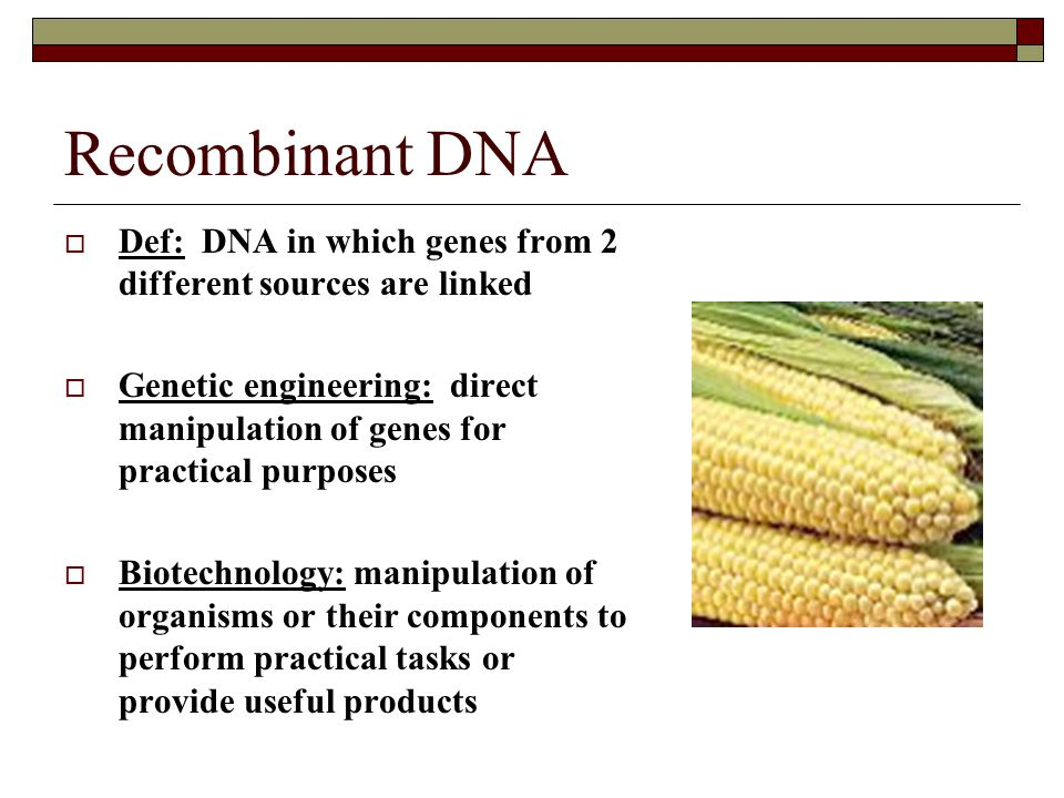 Recombinant DNA  Def: DNA in which genes from 2 different sources are linked  Genetic engineering: direct manipulation of genes for practical purpos