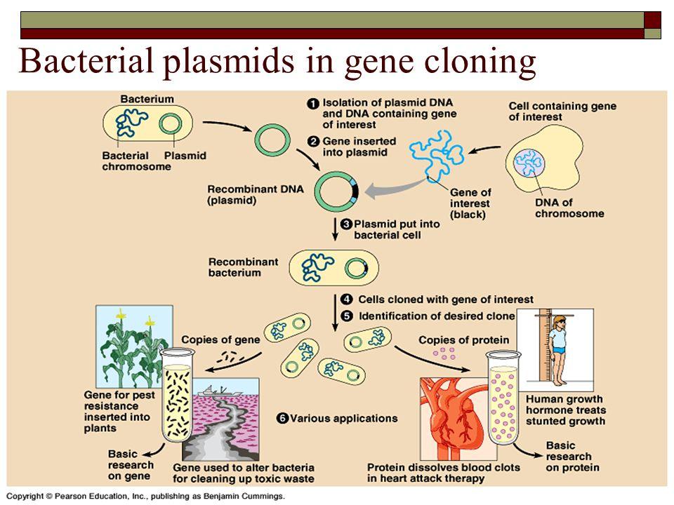 Bacterial plasmids in gene cloning