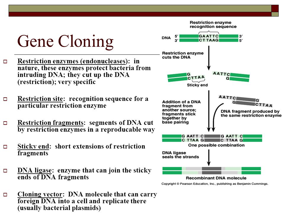 Practical DNA Technology Uses  Diagnosis of disease  Human gene therapy  Pharmaceutical products (vaccines)  Forensics  Animal husbandry (transgenic organisms)  Genetic engineering in plants  Ethical concerns?