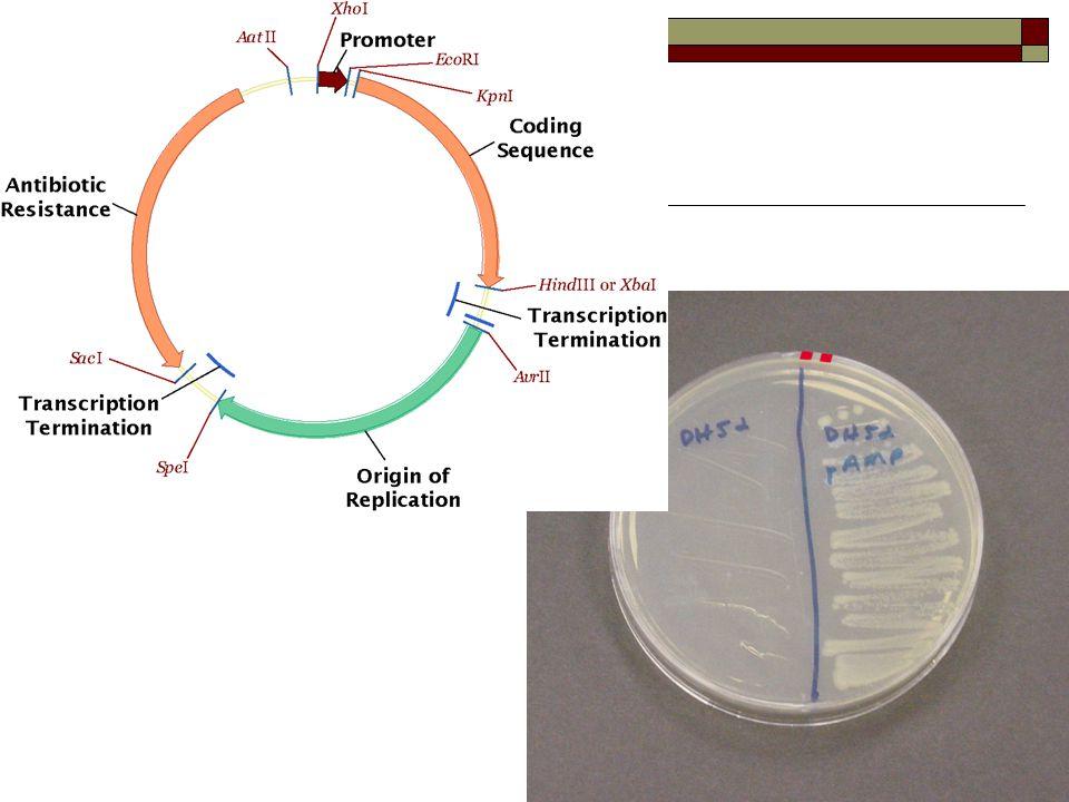  http://www.sumanasinc.com/webcontent/ani samples/molecularbiology/plasmidcloning_fl a.html http://www.sumanasinc.com/webcontent/ani samples/molecularbiology/plasmidcloning_fl a.html