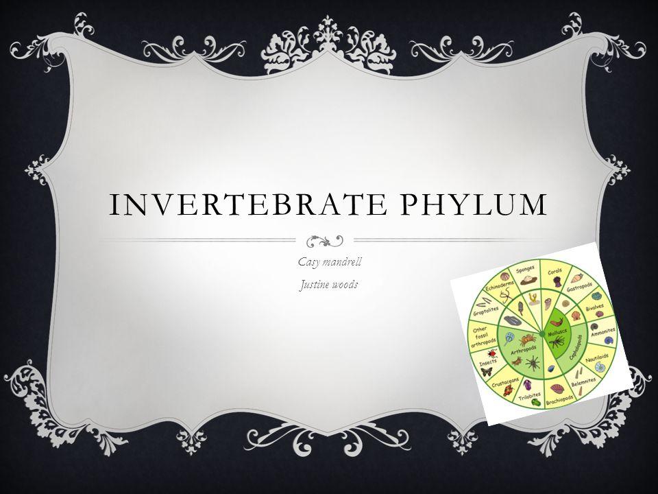 INVERTEBRATE PHYLUM Casy mandrell Justine woods