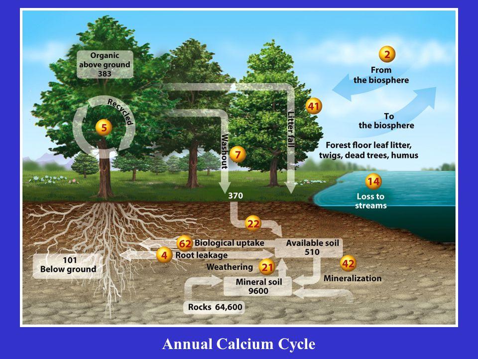 Annual Calcium Cycle