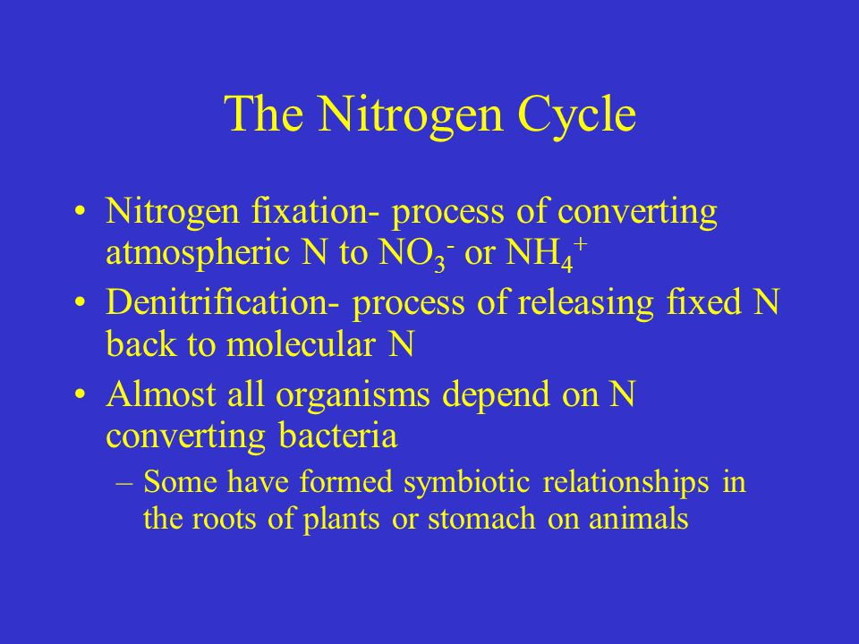 The Nitrogen Cycle Nitrogen fixation- process of converting atmospheric N to NO 3 - or NH 4 + Denitrification- process of releasing fixed N back to molecular N Almost all organisms depend on N converting bacteria –Some have formed symbiotic relationships in the roots of plants or stomach on animals