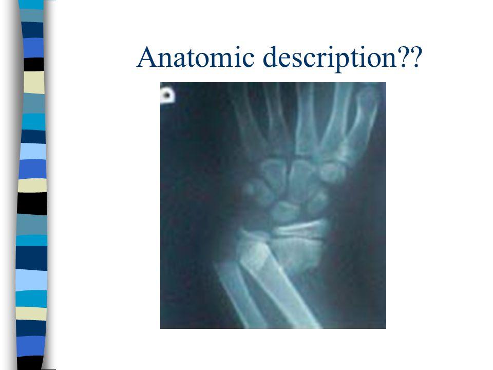 Anatomic description??