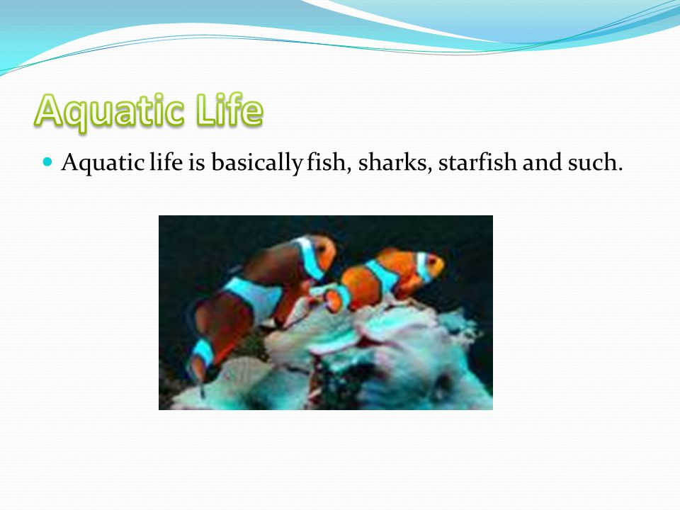 Aquatic life is basically fish, sharks, starfish and such.