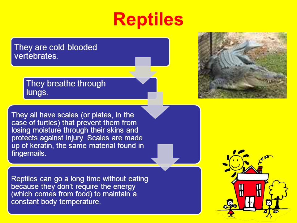 Reptiles They are cold-blooded vertebrates. They breathe through lungs. They all have scales (or plates, in the case of turtles) that prevent them fro