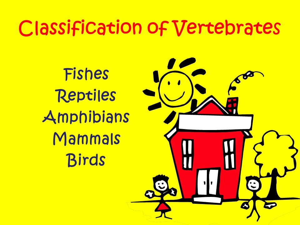 Classification of Vertebrates Fishes Reptiles Amphibians Mammals Birds