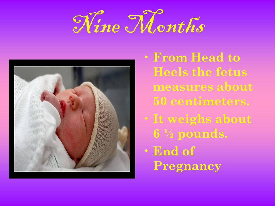 Nine Months From Head to Heels the fetus measures about 50 centimeters.