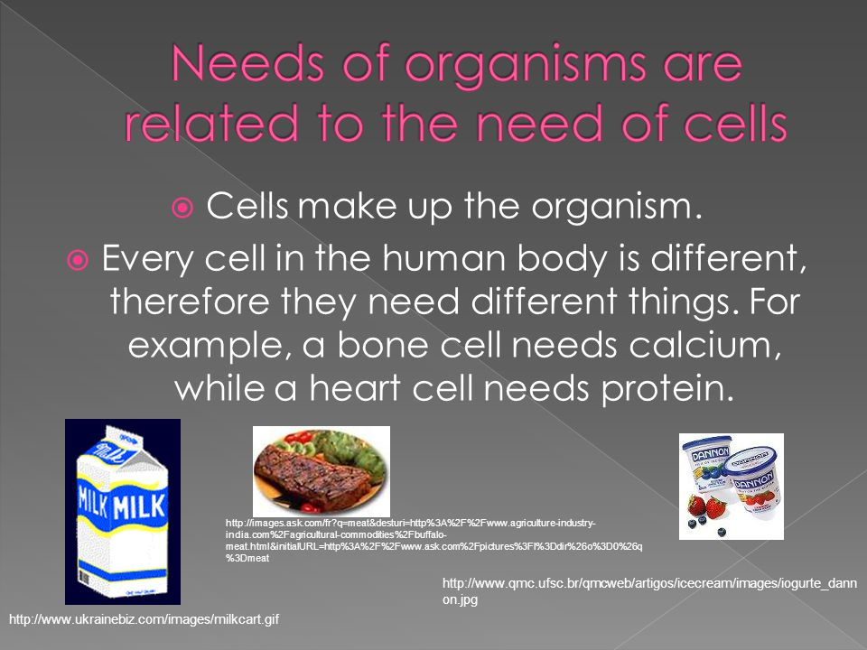  Cells make up the organism.