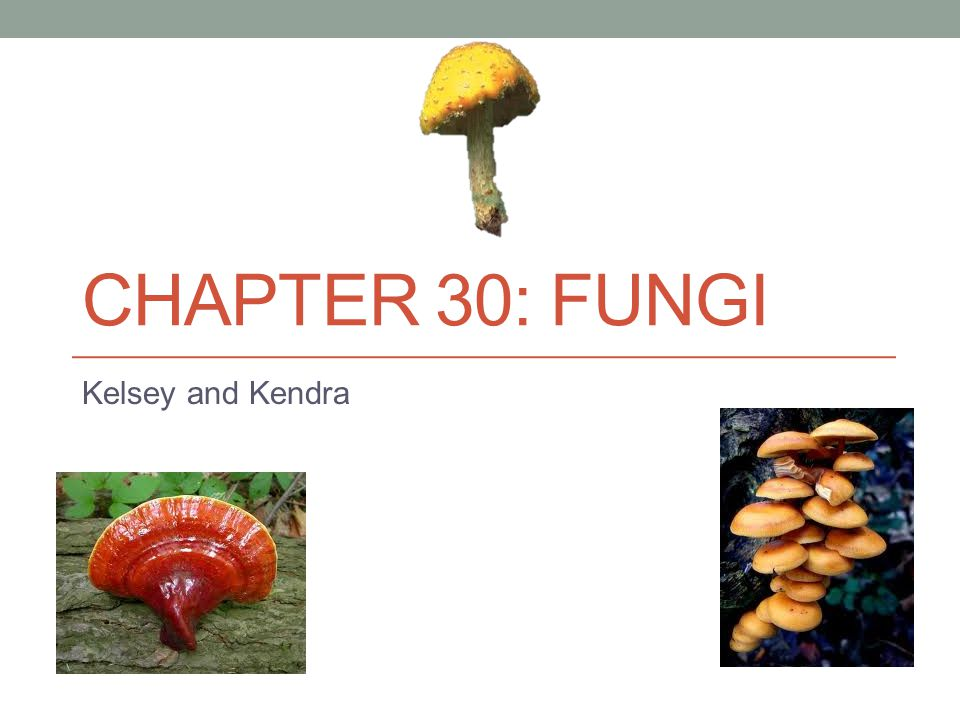 CHAPTER 30: FUNGI Kelsey and Kendra