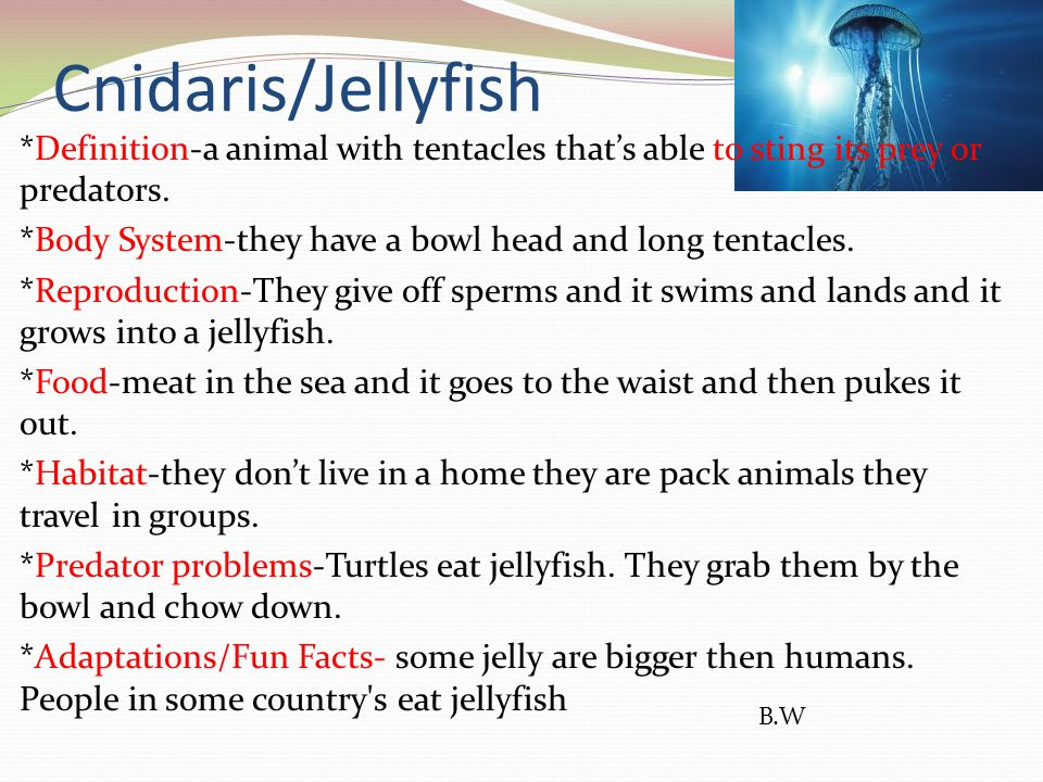 Cnidaris/Jellyfish B.W *Definition-a animal with tentacles that's able to sting its prey or predators. *Body System-they have a bowl head and long ten