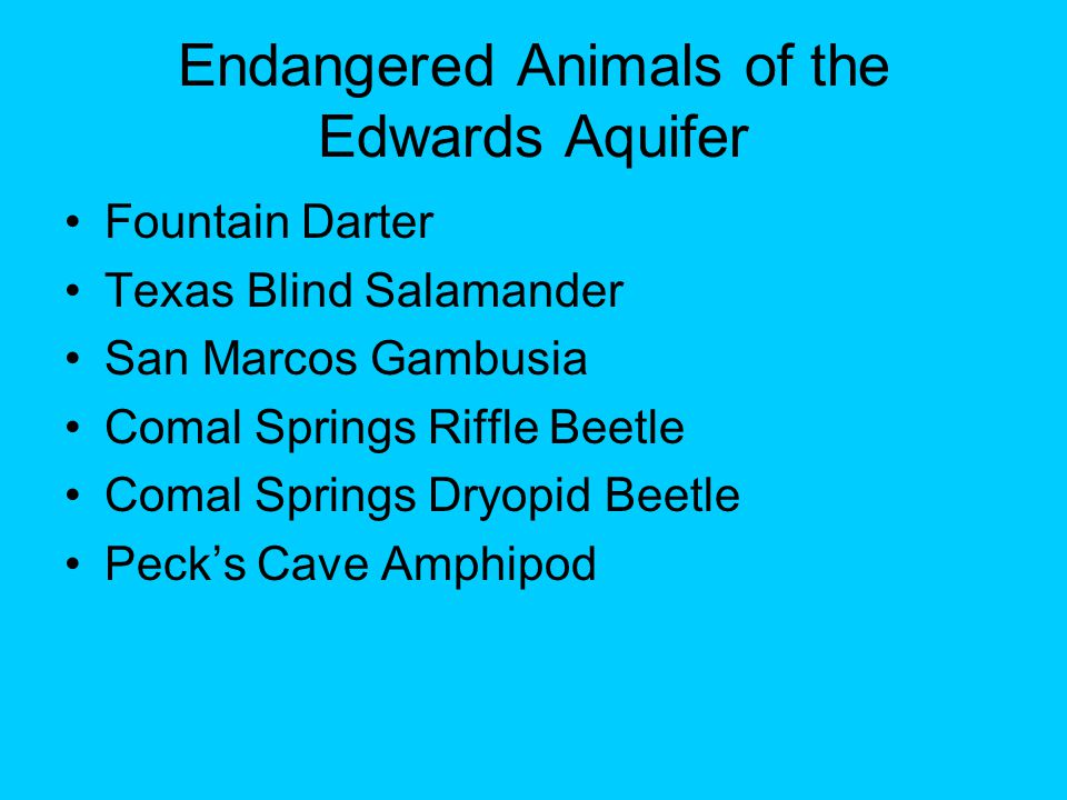 Endangered Animals of the Edwards Aquifer Fountain Darter Texas Blind Salamander San Marcos Gambusia Comal Springs Riffle Beetle Comal Springs Dryopid Beetle Peck's Cave Amphipod