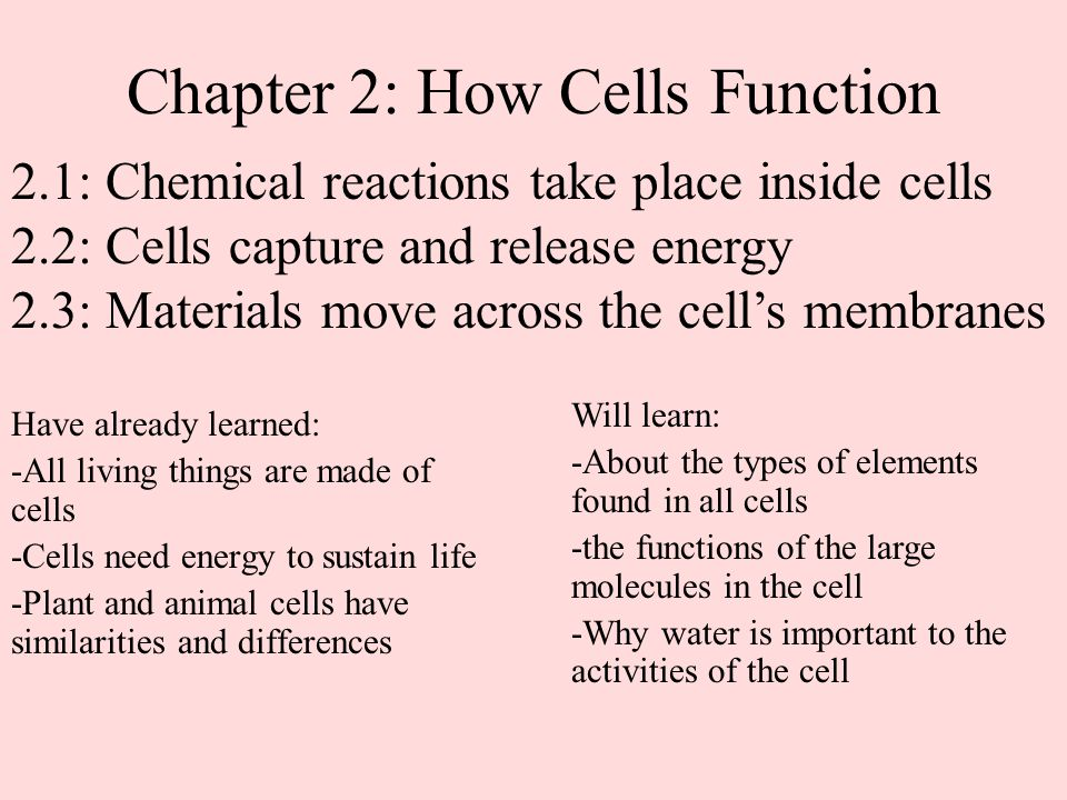 Chapter 2: How Cells Function Have already learned: -All living things are made of cells -Cells need energy to sustain life -Plant and animal cells ha