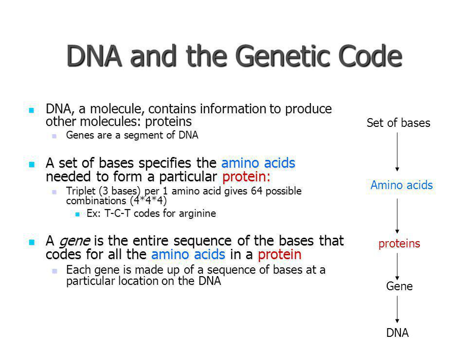 DNA and the Genetic Code DNA, a molecule, contains information to produce other molecules: proteins DNA, a molecule, contains information to produce o