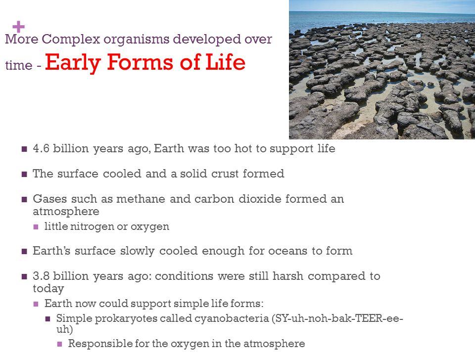 + More Complex organisms developed over time - Early Forms of Life 4.6 billion years ago, Earth was too hot to support life The surface cooled and a s