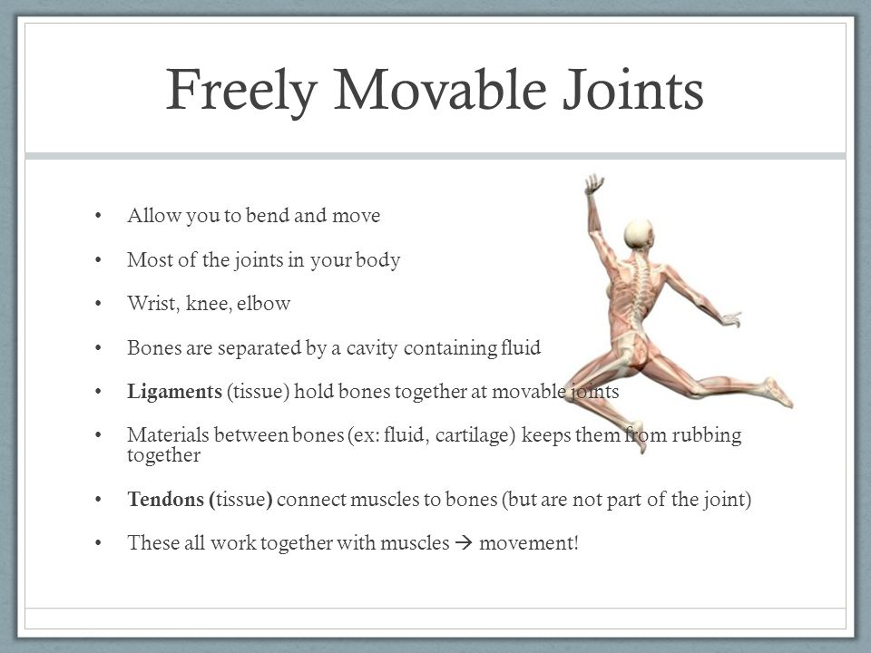 Freely Movable Joints Allow you to bend and move Most of the joints in your body Wrist, knee, elbow Bones are separated by a cavity containing fluid L