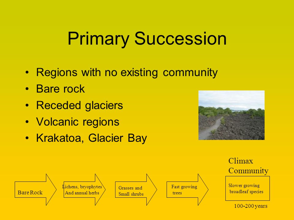 Primary Succession Regions with no existing community Bare rock Receded glaciers Volcanic regions Krakatoa, Glacier Bay Lichens, bryophytes And annual