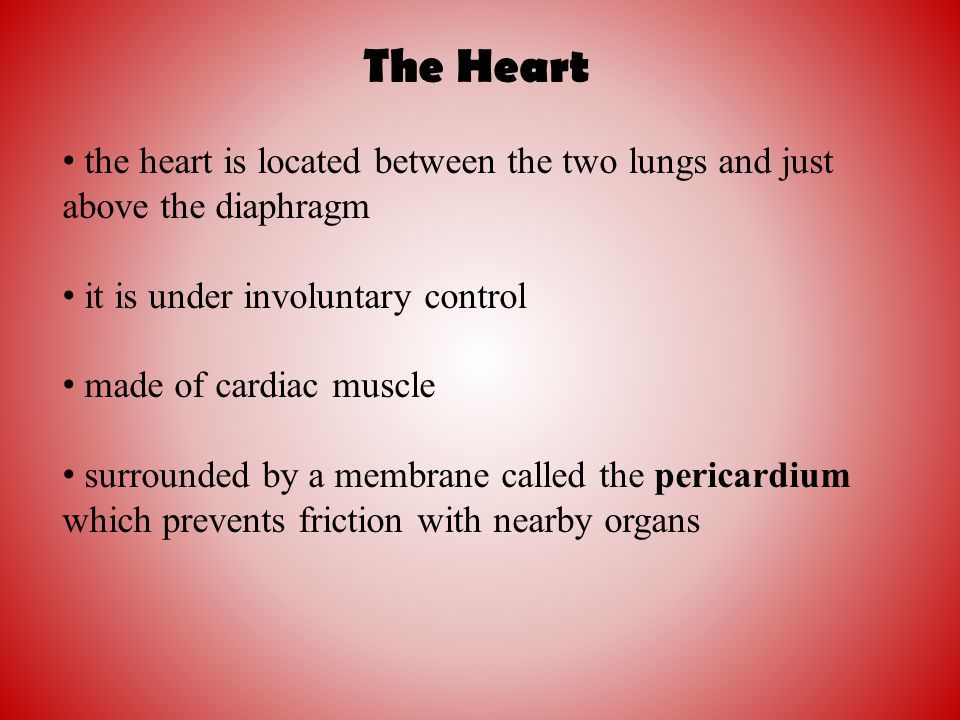 the heart is located between the two lungs and just above the diaphragm it is under involuntary control made of cardiac muscle surrounded by a membran