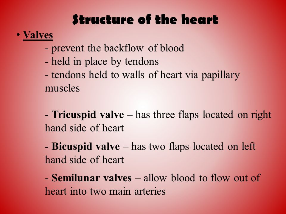 Structure of the heart Valves - prevent the backflow of blood - held in place by tendons - tendons held to walls of heart via papillary muscles - Tric