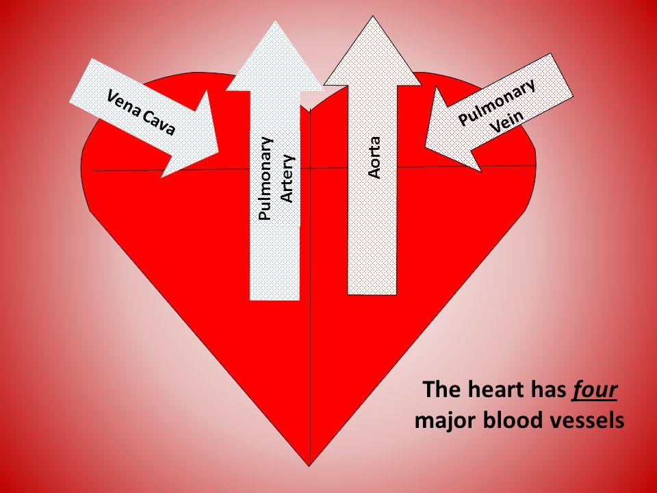 Aorta Pulmonary Vein Pulmonary Artery Vena Cava The heart has four major blood vessels