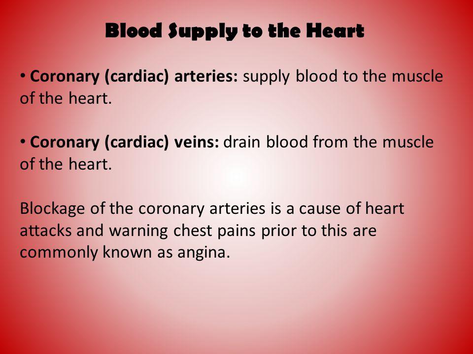 Blood Supply to the Heart Coronary (cardiac) arteries: supply blood to the muscle of the heart. Coronary (cardiac) veins: drain blood from the muscle