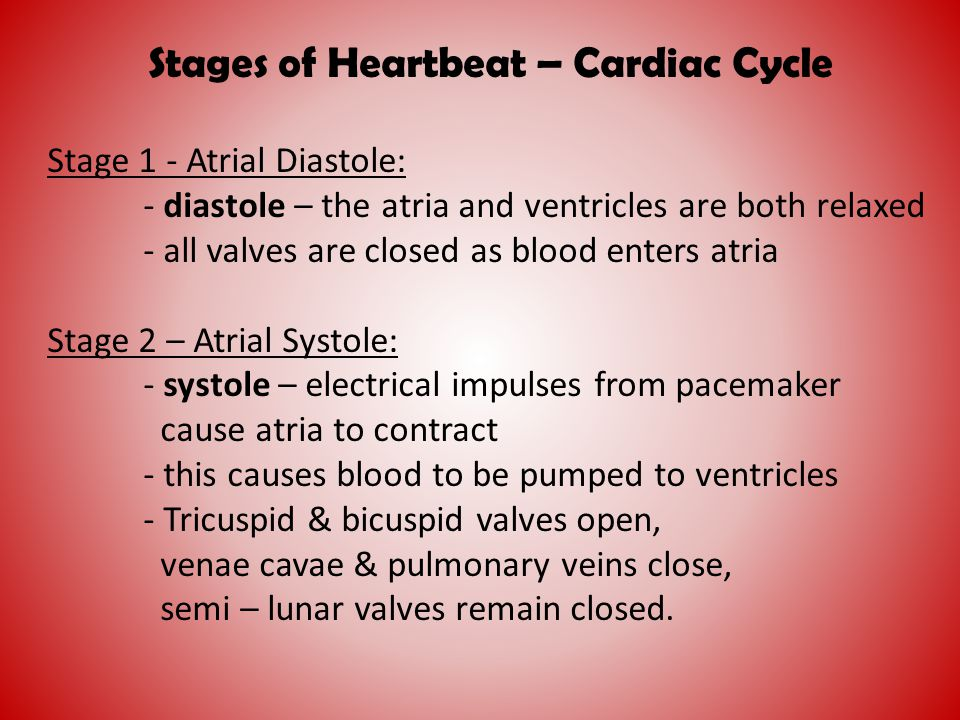 Stages of Heartbeat – Cardiac Cycle Stage 1 - Atrial Diastole: - diastole – the atria and ventricles are both relaxed - all valves are closed as blood