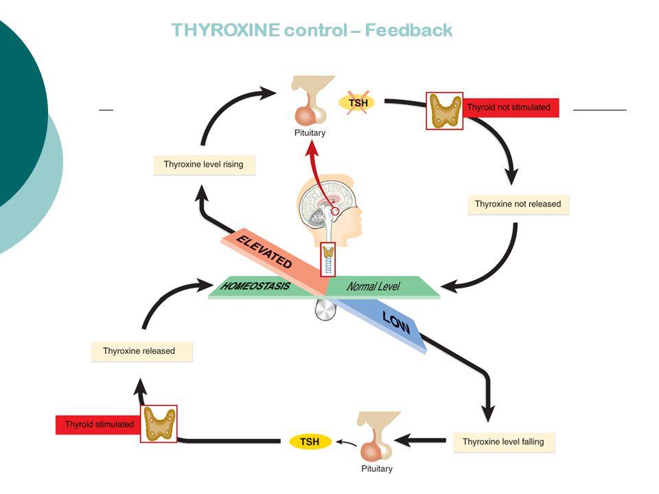 THYROXINE control – Feedback
