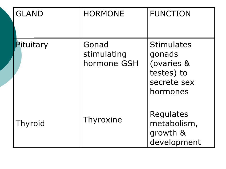 GLANDHORMONEFUNCTION Pituitary Thyroid Gonad stimulating hormone GSH Thyroxine Stimulates gonads (ovaries & testes) to secrete sex hormones Regulates
