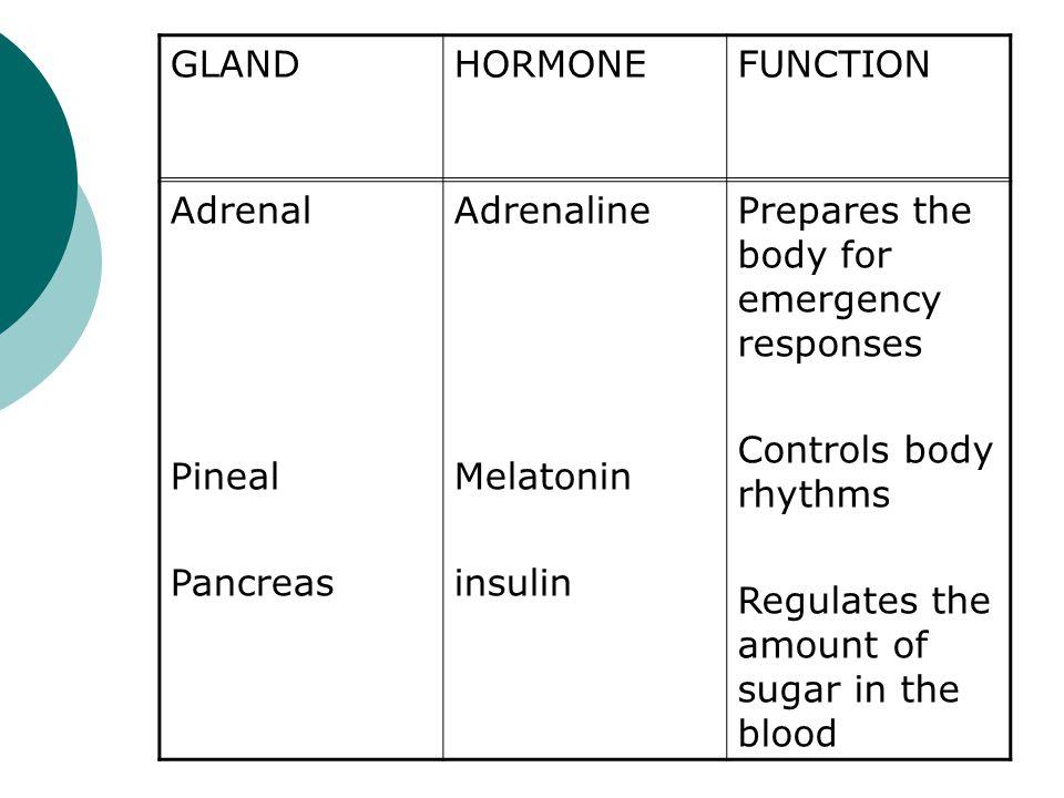 GLANDHORMONEFUNCTION Adrenal Pineal Pancreas Adrenaline Melatonin insulin Prepares the body for emergency responses Controls body rhythms Regulates th